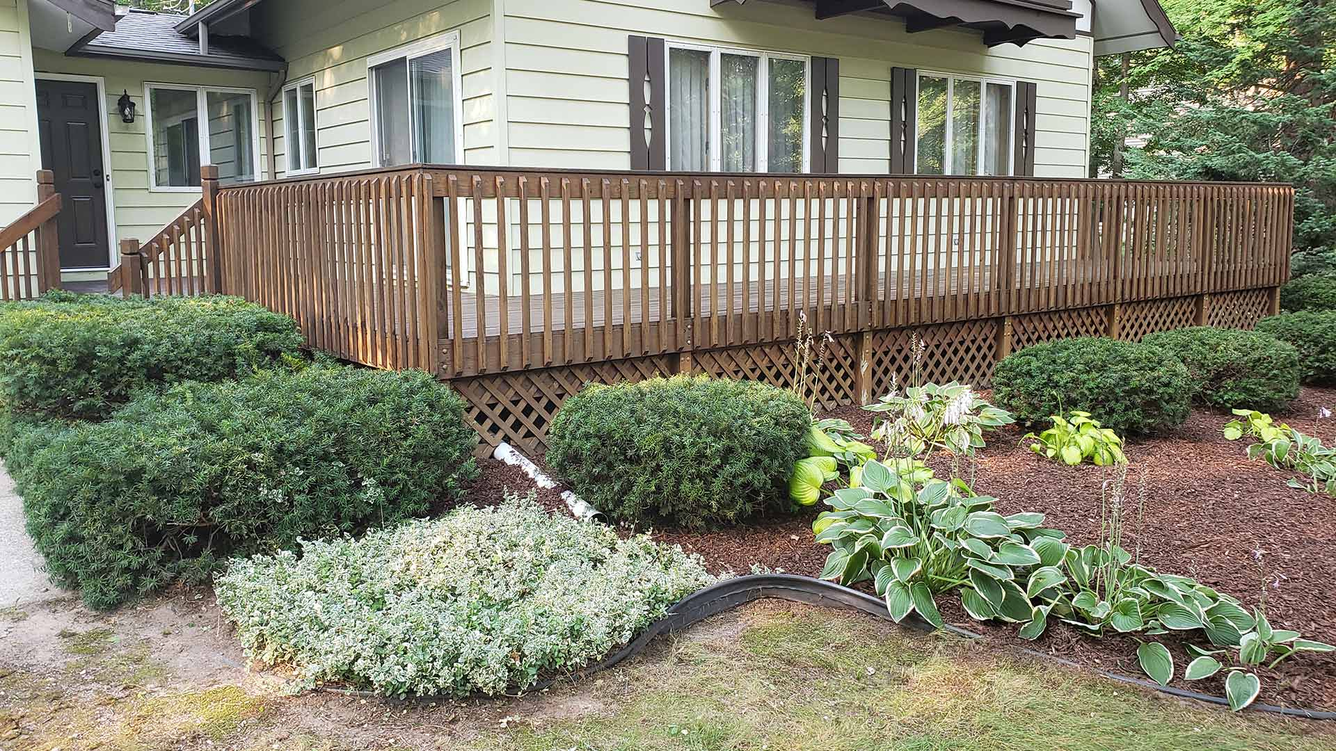 Neatly trimmed bushes in landscape beds.