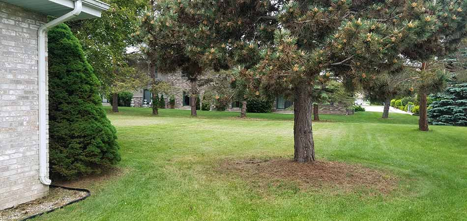 This lawn of a Bay City, MI homeowner was cut during a one-time mowing session.