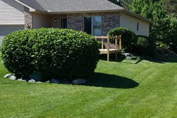 Large green, healthy, trimmed bush in front of a home in Midland