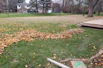 Leaves in front of a home in Midland, MI that are being cleaned up.